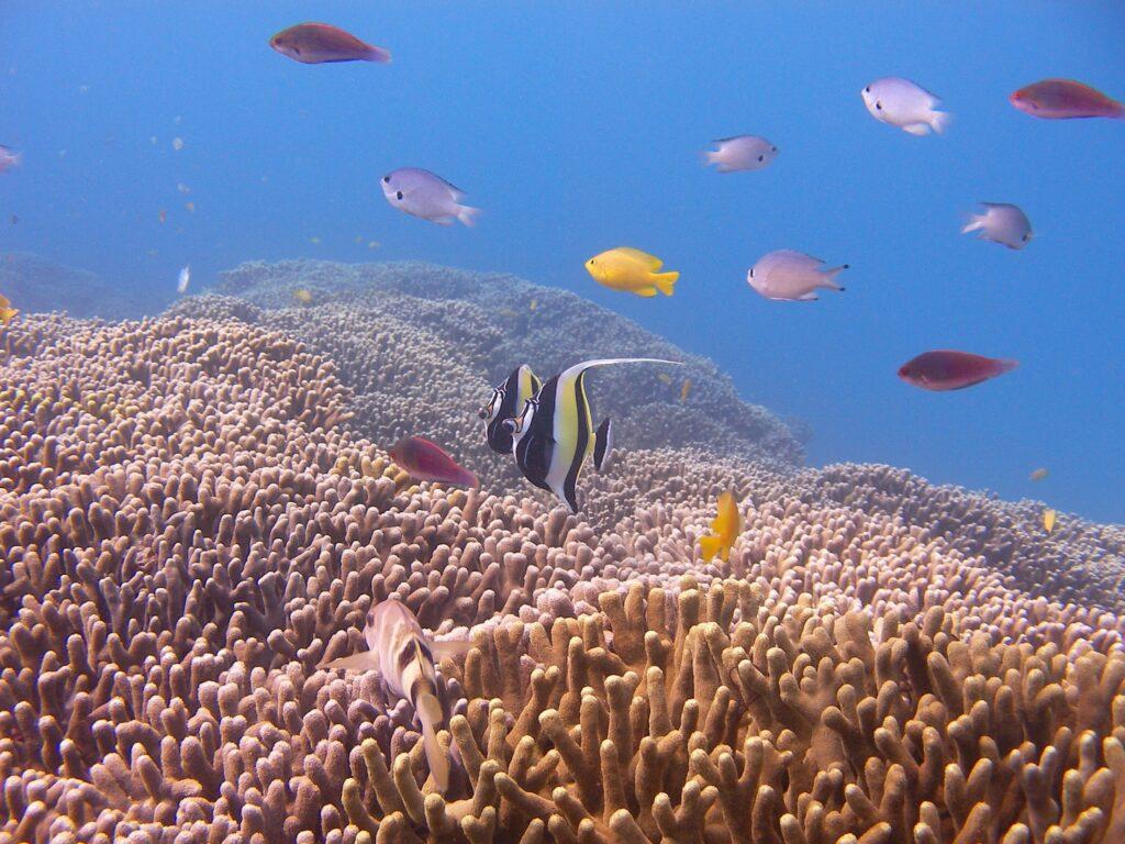 ダイビング中に見られる熱帯魚