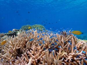 慶良間諸島で見られるサンゴ礁