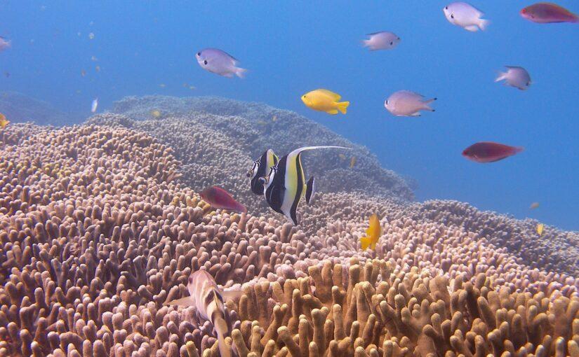慶良間諸島で見られる熱帯魚