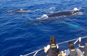 クジラ,ホエールウォッチング
