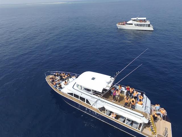 慶良間諸島でホエールウォッチングに向かう船
